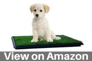 Best Artificial Turf for Dogs