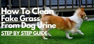 how to clean fake grass from dog urine